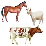 Watercolor illustration, set. Farm animals, cow, horse, goat