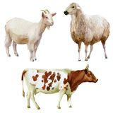 Watercolor illustration, set. Farm animals, cow, sheep, goat