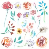 Watercolor illustration set flowers isolated on white background royalty free illustration