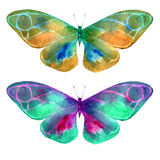 Watercolor illustration, set, image of colored transparent butterflies . Royalty Free Stock Image