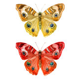 Watercolor illustration, set, image of colored transparent butterflies. Stock Photos