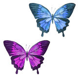 Watercolor illustration, set, image of colored transparent butterflies. Stock Image