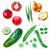 Watercolor illustration, set, image of vegetables, onions, peas, cucumbers and tomatoes. Stock Image