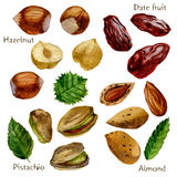 Watercolor illustration. Set of nuts and dates. Pistachios, almonds, hazelnuts and dates. Watercolor illustration. Set of nuts and dates. Pistachios, almonds Royalty Free Stock Images