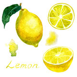 Watercolor illustration of a set, with a picture of a bright yellow lemon and its parts. Drawing watercolor Stock Photo