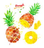 Watercolor illustration set of pineapple Stock Photos