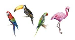 Watercolor illustration set of tropical birds.