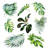 Watercolor illustration set of tropical leaves royalty free stock image