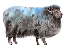 Watercolor illustration of a sheep Stock Photos
