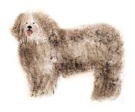 Watercolor illustration of shepherd dog bullet in white background. Stock Photos