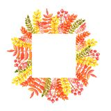 Watercolor illustration of a square frame of autumn leaves and sprigs of rowan of red orange shades stock image