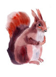 Watercolor illustration of a squirrel Stock Photo