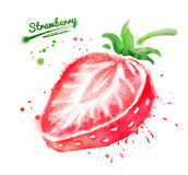 Watercolor illustration of strawberry Royalty Free Stock Image