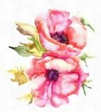Watercolor Illustration Stylized Poppy Flowers Royalty Free Stock Photos