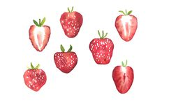 Watercolor illustration of summer berry, hand drawn set of strawberry. Summer fruits vector illustration