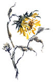 Watercolor illustration of sunflower Royalty Free Stock Photos