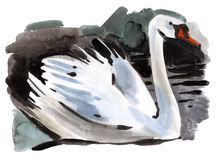 Watercolor illustration of Swan Royalty Free Stock Photo