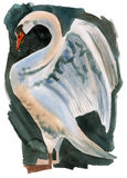 Watercolor illustration of Swan Stock Image