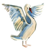 Watercolor illustration of Swan in white background. Royalty Free Stock Photo