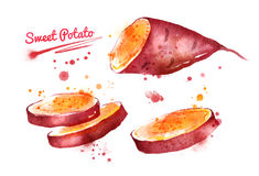 Watercolor illustration of sweet potato Stock Photos