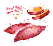 Watercolor illustration of sweet potato Royalty Free Stock Photos