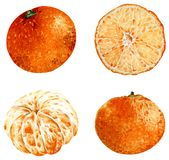 Tangerine clipart isolated on white background. Tropical illustration. Fruits. Watercolor illustration stock photo