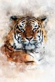 Tiger - watercolor illustration portrait royalty free stock images
