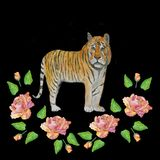 Watercolor.Illustration of a tiger in roses on a black background. vector illustration