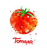 Watercolor illustration of tomato Royalty Free Stock Images