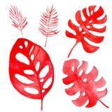 Watercolor illustration of a tropical leaves of coral color royalty free illustration