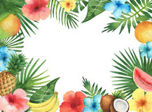 Watercolor illustration of the tropical plants and fruits. Stock Images