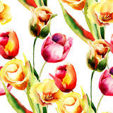 Watercolor illustration of Tulips flowers Stock Photography