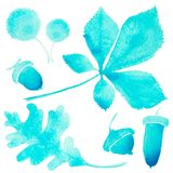 Illustration: turquoise tree leaves and fruits contours oak, chestnut, acorn isolated on white background. Watercolor Illustration: turquoise tree leaves and Royalty Free Stock Photography