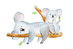Watercolor illustration of two adorable cartoon koala bears sitting on eucalyptus tree branch Royalty Free Stock Photography