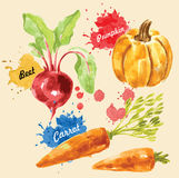Watercolor illustration of vegetables Stock Photo