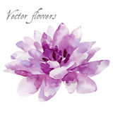 Watercolor illustration  on white background Stock Images