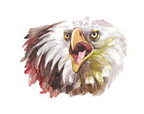 Watercolor illustration of a white eagle head with an open beak looking to the side. A symbol of America Stock Images