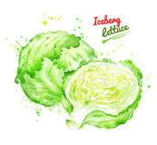 Watercolor illustration of whole and half iceberg. Lettuce with paint smudges and splashes Stock Image