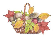 Watercolor illustration of wicker basket with mushrooms. stock illustration