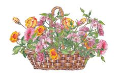 Watercolor illustration of wicker basket with roses. Watercolor illustration of wicker basket with roses on white background royalty free illustration