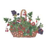 Watercolor illustration of wicker basket. vector illustration