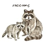 Watercolor baby and mom raccoon, isolated white background. Wild animals illustration