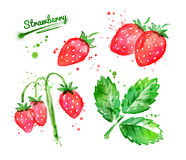 Watercolor illustration of wild strawberries. Leaf and brunch with paint smudges and splashes Royalty Free Stock Photos