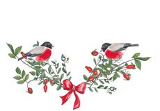 Watercolor  illustration of wildrose,snowberry branches with bullfinchers. stock photography