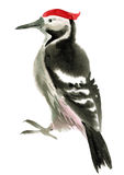 Watercolor illustration of  woodpecker Royalty Free Stock Photos