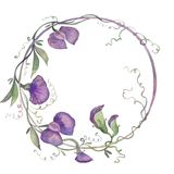 Watercolor illustration wreath fragrant peas purple flowers leaves bouquet royalty free illustration