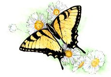 Watercolor Illustration of yellow butterfly on white flowers. stock illustration
