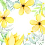 Watercolor illustration with yellow flowers and green leaves royalty free stock photography