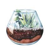 Watercolor illustration. Zebra cactus. Haworthia striped. Terrar Stock Photos