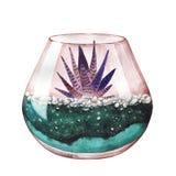 Watercolor illustration. Zebra cactus. Haworthia striped. Terrar Stock Images